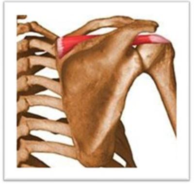 El dolor de hombro en nadadores | www.trichile.cl